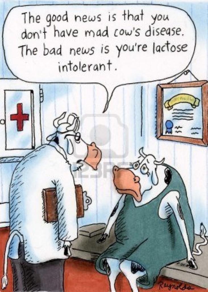 La buona notizia è che non hai la malattia della mucca pazza. La cattiva è che sei intollerante al lattosio!