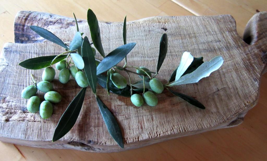 Ottobre in Toscana è tempo di olive.